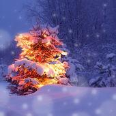 Winter pine tree — Stock Photo