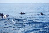 Delfiny w falach oceanu — Zdjęcie stockowe