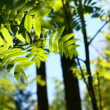 Incredible green leaf foliage - Stockfoto