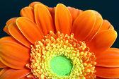 红色的花 — 图库照片