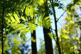 Otroligt grönt blad blad — Stockfoto