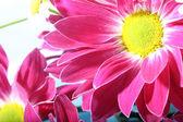 Flower — Photo