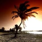 Sunrise palm — Stock Photo