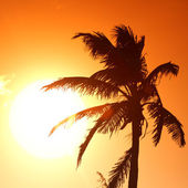 Sunrise palm — Stock Photo