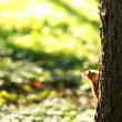 Squirrel in the autumn forest — Stock Photo