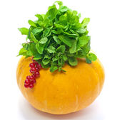 Pumpkin and green leaves and currant on white background — Stock Photo