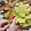 Autumn maple leaves in women hands — Stock Photo
