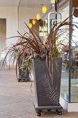 I vasi di fiori — Foto Stock