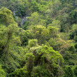 Dense forest on the rock — Stock Photo