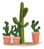 Cactus — Stock Vector
