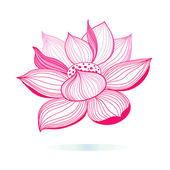 Graphic pink lotus — Stock Vector