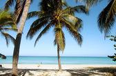 Plaża z palmami — Zdjęcie stockowe