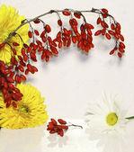 En berberis gren, gula blommor och kamomill — Stockfoto