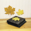 The photograph album is decorated by yellow leaves — Stock Photo