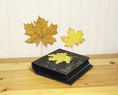 由黄色树叶装饰的照片相册 — 图库照片