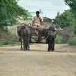 Stock Photo: Bullock cart