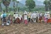 Landwirtschaft in Indien — Stock Photo