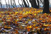 Чарующая осень — Stock Photo