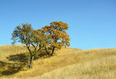 Trees in field — Stock Photo