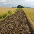 Stock Photo: Freshly plowed field furrow.