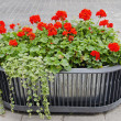 Red flowers growing in modernistic pot. - Stock Photo