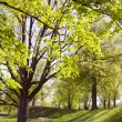 Stock Photo: Long lived tree alley in spring.