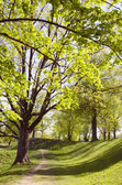 Long lived tree alley in the spring. — Stock Photo