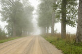Foggy gravel road surrounded by old trees alley. — Stock Photo