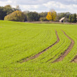 Winter crops rye waiting for winter time. - Stock Photo