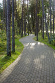 Devious paved path tiles in pine forest. — Foto de Stock