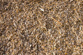 Background of wood shavings.Biomass fuels. — Stock Photo