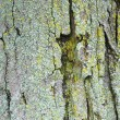 Tree bark texture - Foto de Stock