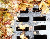 Leaf on the wet manhole — Stock Photo