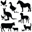 Big collection of animals — Stock Vector #7103714