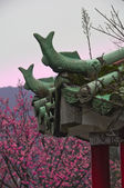 Green temple roof and cherry blossom — Stock Photo