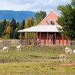 Alpacas on a farm. — Foto Stock