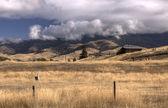 在蒙大拿州美洲驼农场. — 图库照片