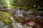 Swift mountain stream. — Photo