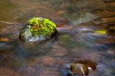 Moos auf einem stein in einem stream. — Stockfoto