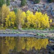 Royalty-Free Stock Photo: Reflection of the yellow trees.