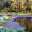 Fall colors at wetland area. — Stock Photo
