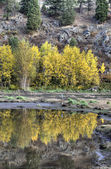 Reflection of Autumn leaves. — Stock Photo