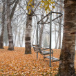 Stock Photo: Empty swing in park.