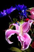 ユリおよび花の背景. — ストック写真