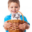 Smiling little boy with kitty in wicker — Stock Photo