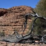 l'Australie Uluru ayers rock — Photo
