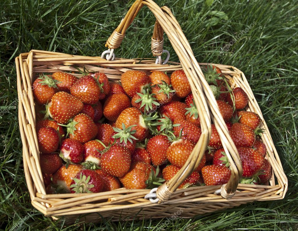 Strawberry. Testy  and sweet  berryes  Stock Photo #6925960