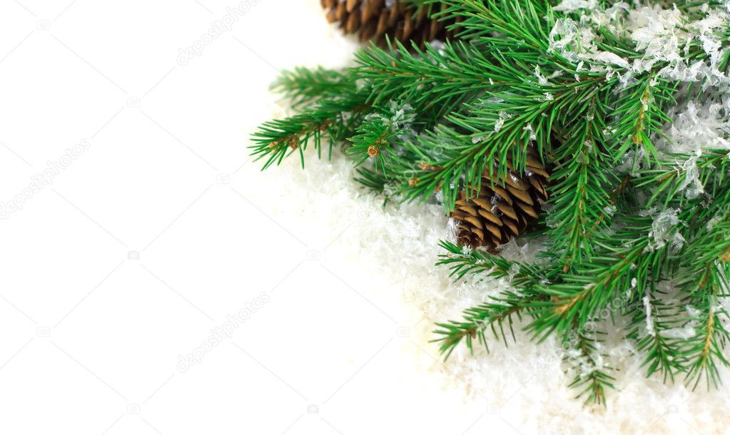 Branch of Christmas tree on white snow   Stock Photo #7641750