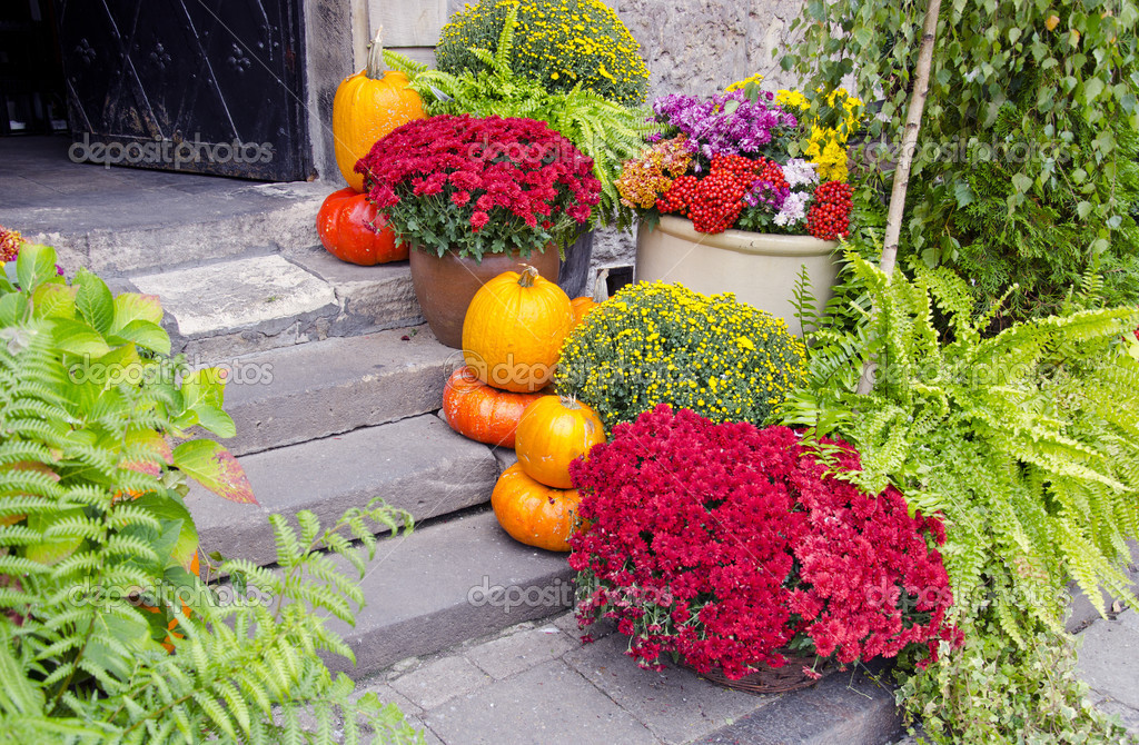 Flowers and pumpkins on street stair — Stockfoto #7187104