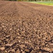 Stock Photo: Landscape with october tillage